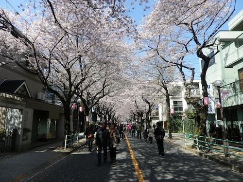 2012桜2.JPG