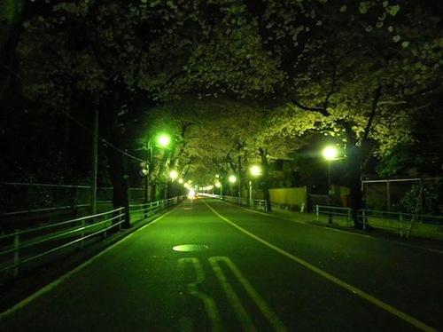 2012桜7.JPG